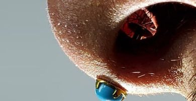 piercing spetril nariz